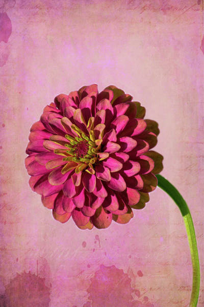 Wall Art - Photograph - Pink Flower 2 by Kevin O'Hare