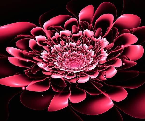 Digital Art - Pink Flower by Anastasiya Malakhova