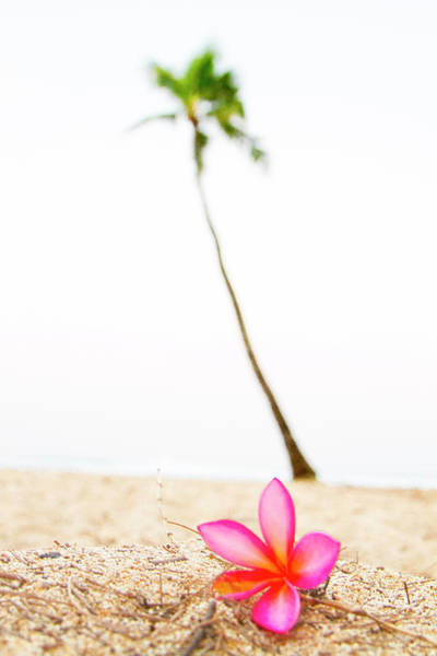 Wall Art - Photograph - Pink Flower And Palm by Sean Davey