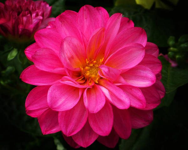 Photograph - Pink Flower by Anthony Jones