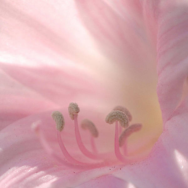 Photograph - Pink Flower by Jill Reger