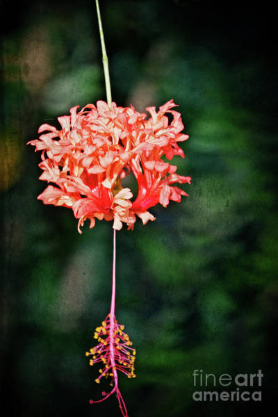 Wall Art - Photograph - Pink Flower - Just Hanging by Mary Machare