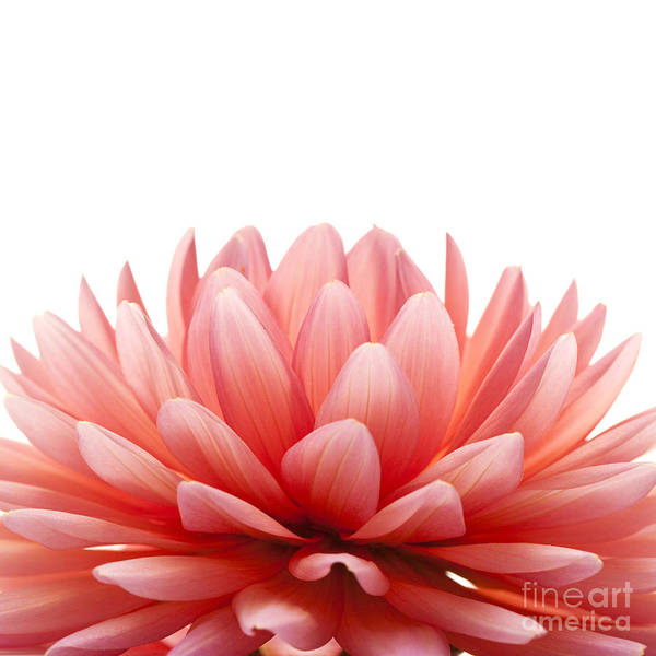 Photograph - Pink Flower by Matt J