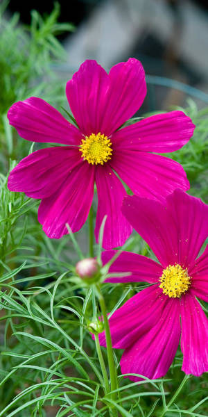 Photograph - Pink Flower by Michael Bessler
