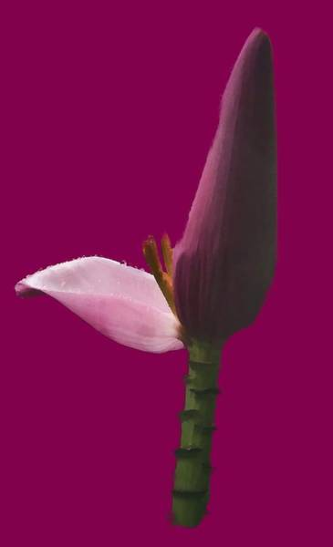 Photograph - Pink Flower by Pamela Walton