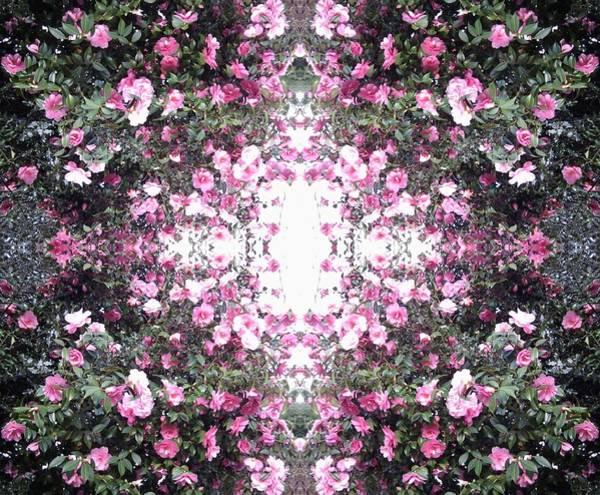 Photograph - Pink Flower Sky Window by Julia Woodman