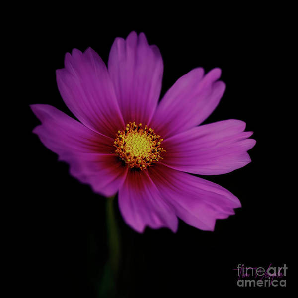 Photograph - Pink Flower by Tim Wemple