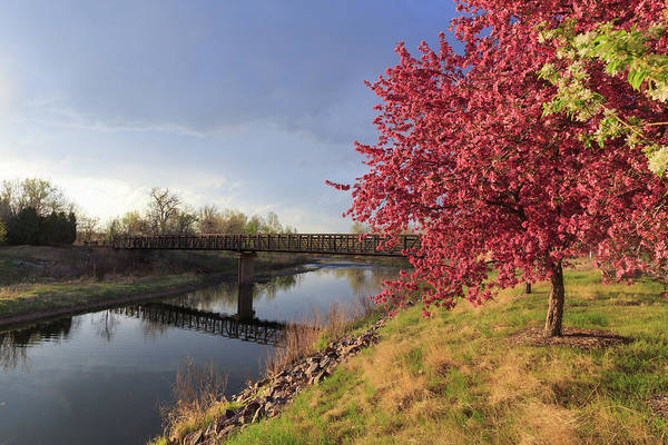 Wall Art - Photograph - Pink Flowering Crab Apple Tree Along The South Platte River by Bridget Calip
