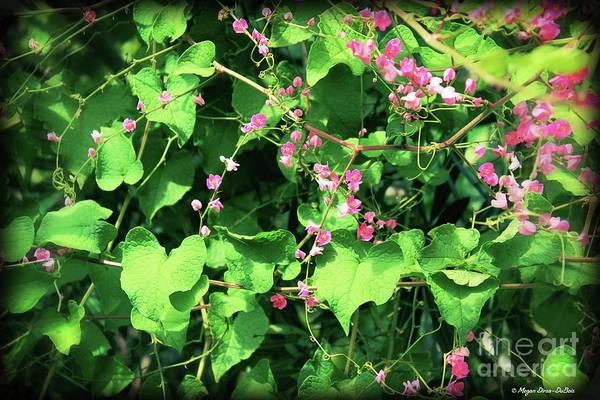 Photograph - Pink Flowering Vine2 by Megan Dirsa-DuBois