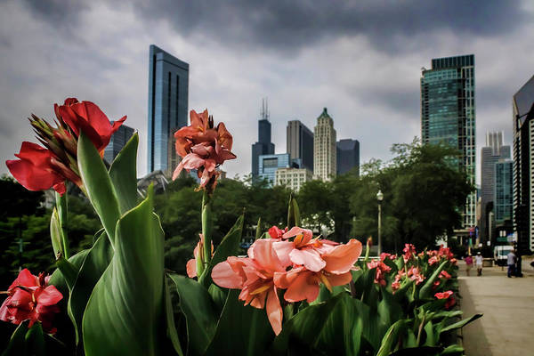 Photograph - Pink Flowers And Chicago Skyline by Sven Brogren
