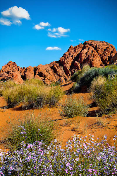 Photograph - Pink Flowers And Red Rock by Renee Sullivan