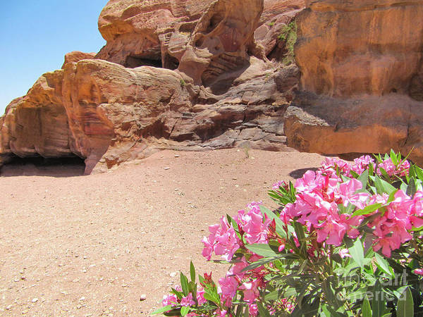 Photograph - Pink Flowers At Petra by Donna L Munro