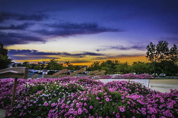 Photograph - Pink Flowers At The Steps by Francisco Gomez