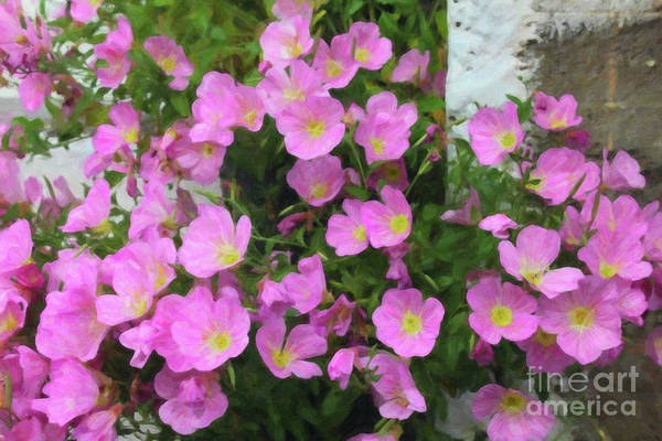 Photograph - Pink Flowers Greece by Donna L Munro
