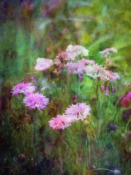 Photograph - Pink Flowers In The Garden 1632 Idp_2 by Steven Ward