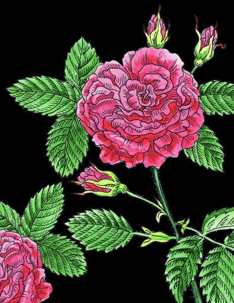 Wall Art - Painting - Pink French Rose Watercolour  by Irina Sztukowski