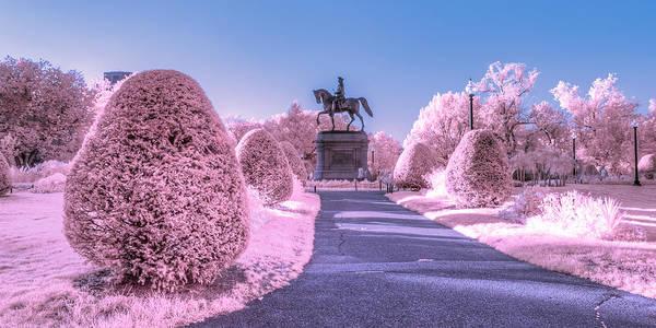 Photograph - Pink Garden by Bryan Xavier