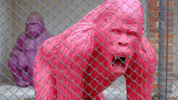 Photograph - Pink Gorilla by August Timmermans