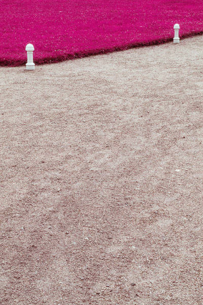 Photograph - Pink Grass by Andrey  Godyaykin