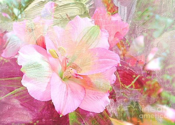 Photograph - Pink Heaven by Jenny Revitz Soper
