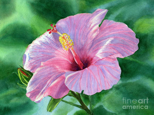 Hibiscus Painting - Pink Hibiscus Flower With Leafy Background by Sharon Freeman