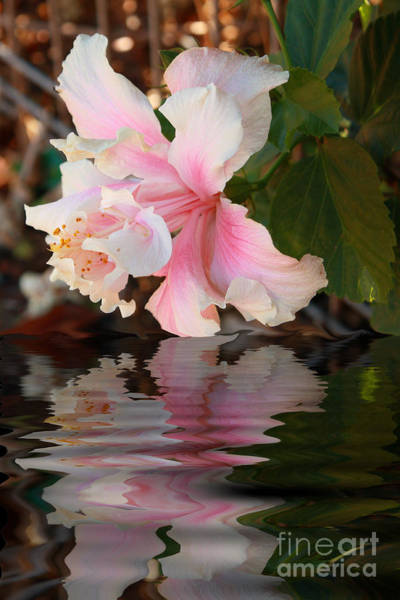Photograph - Pink Hibiscus Reflection by Elaine Teague