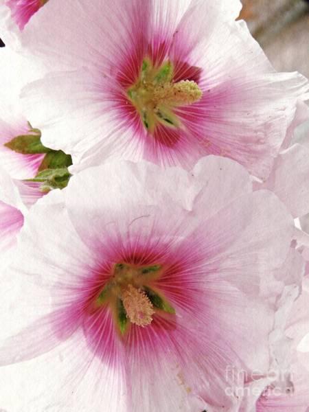 Wall Art - Photograph - Pink Hollyhocks by Sarah Loft