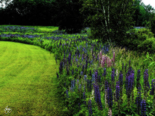 Photograph - Pink In The Lupine Margin by Wayne King