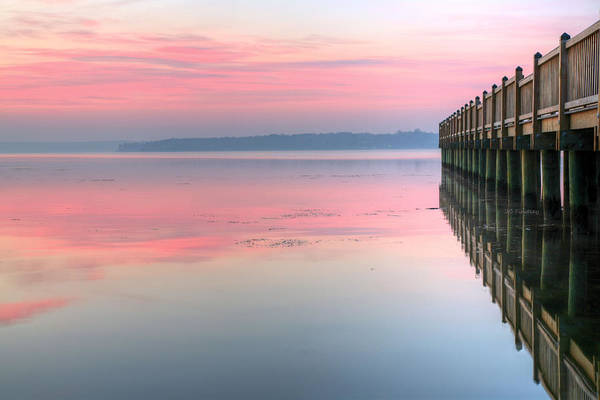 Photograph - Pink by JC Findley