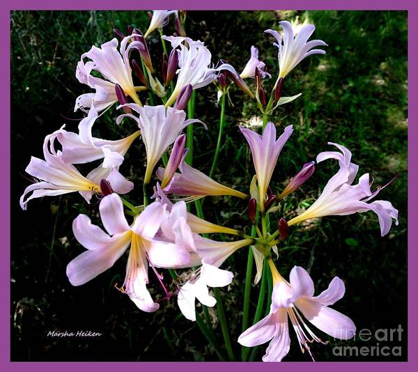 Wall Art - Photograph - Pink Lilies In The Valley by Marsha Heiken
