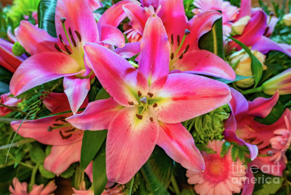 Photograph - Pink Lily by Adrian Evans