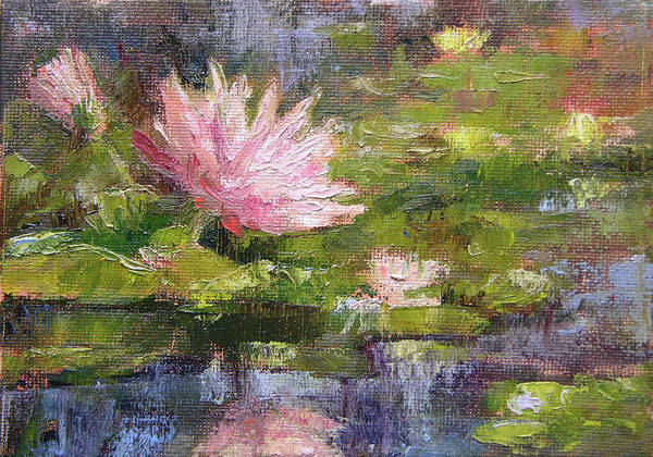 Nympheas Painting - Pink Lily by Tracie Thompson