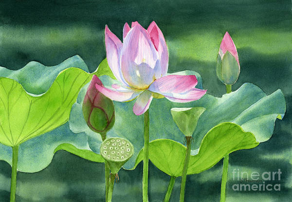 Pink Lotus Wall Art - Painting - Pink Lotus Blossom  Buds And Seed Pods by Sharon Freeman