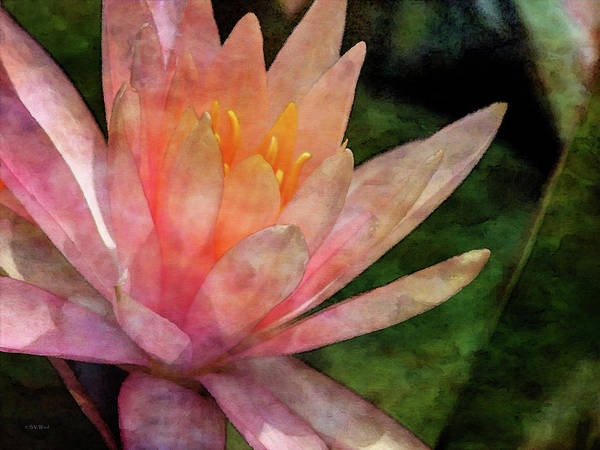 Photograph - Pink Lotus 4575 Idp_2 by Steven Ward