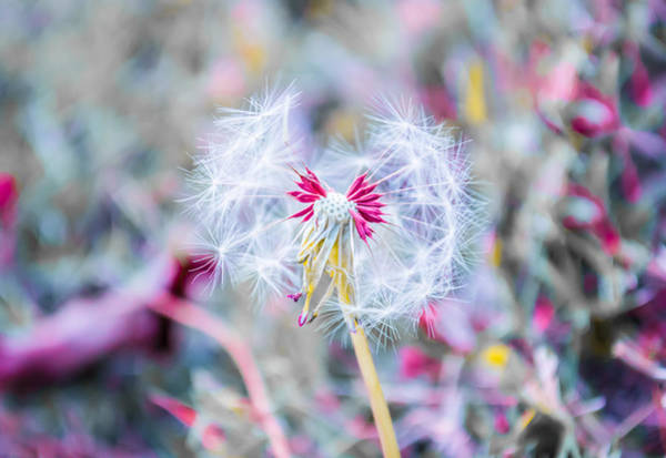 Photograph - Pink Magic by Parker Cunningham