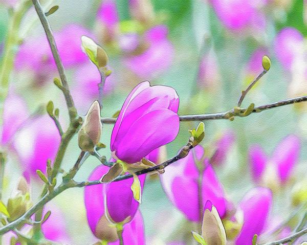 Digital Art - Pink Magnolia  by Keith Smith