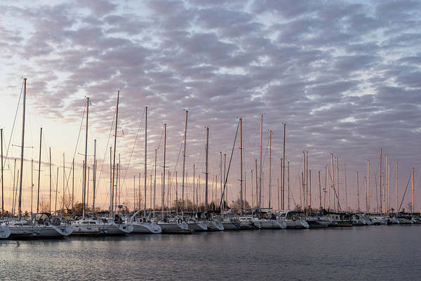 Photograph - Pink Masts - Soft Marina Sunrise by Georgia Mizuleva