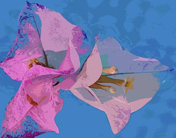 Photograph - Pink On Blue by Coleman Mattingly