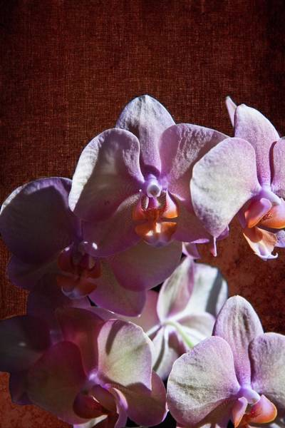 Digital Art - Pink Orchid by Rusty R Smith