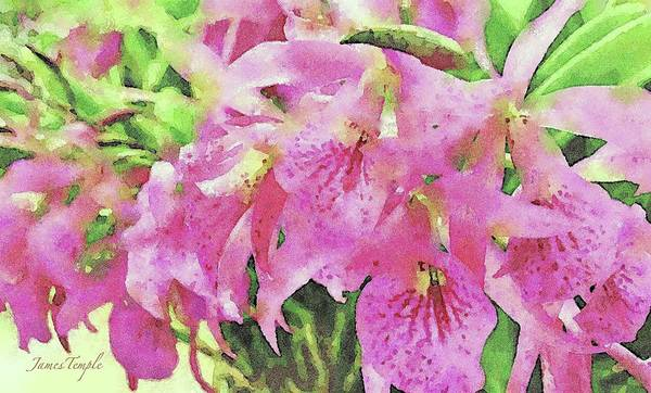 Wall Art - Digital Art - Pink Orchids by James Temple