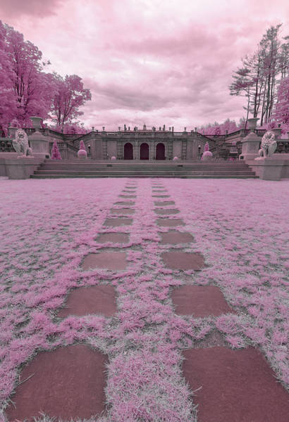 Photograph - Pink Paradise by Brian Hale