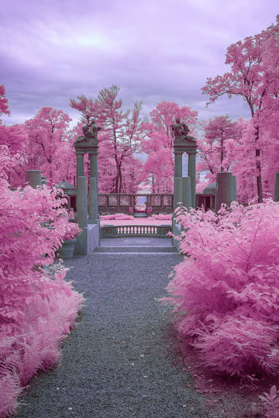 Analogous Color Photograph - Pink Path To Paradise by Brian Hale