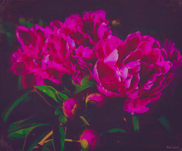 Photograph - Pink Peonies Deep by Anna Louise