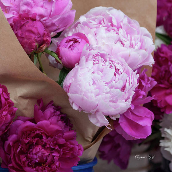 Wall Art - Photograph - Pink Peonies Squared by Suzanne Gaff