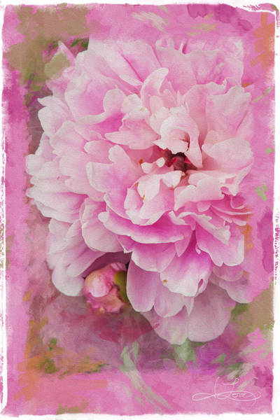 Photograph - Pink Peony 2 by Jill Love