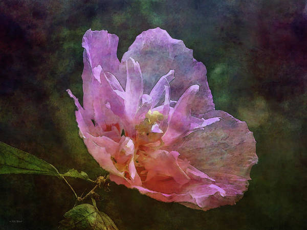 Photograph - Pink Performance 4928 Idp_2 by Steven Ward