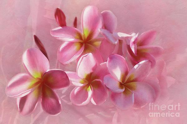 Wall Art - Photograph - Pink Plumeria Pastel By Kaye Menner by Kaye Menner