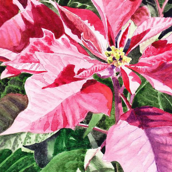 Painting - Pink Poinsettia Plant by Irina Sztukowski