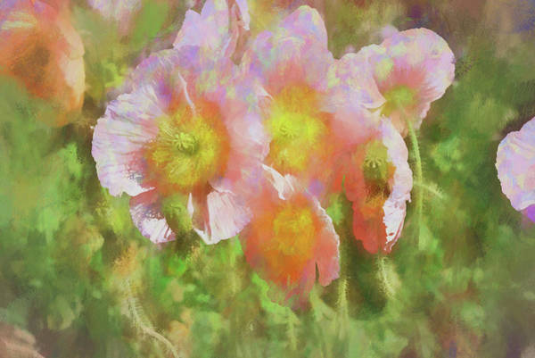Delight Digital Art - Pink Poppies 2 Impression  by Linda Brody