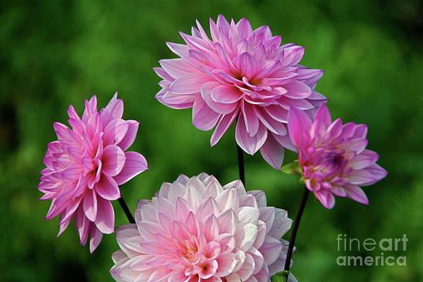 Photograph - Pink Power by Byron Varvarigos